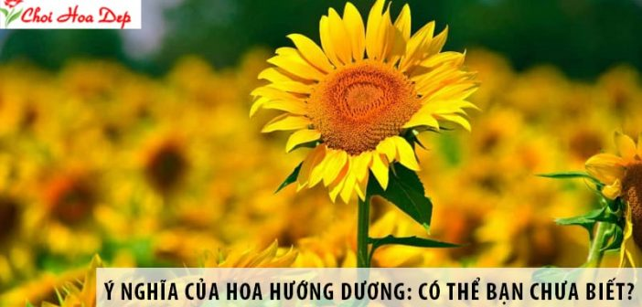 Ý nghĩa của hoa Hướng Dương: Có thể bạn chưa biết?