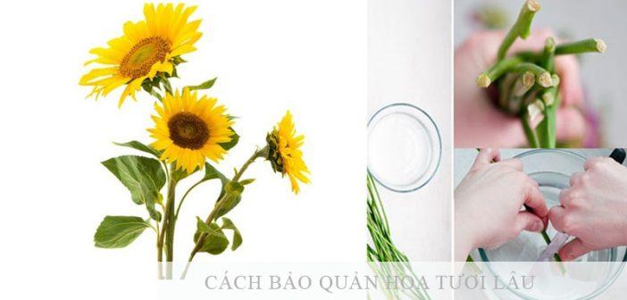 3 cách bảo quản hoa hướng dương tươi lâu nhất-(kỹ thuật bảo quản)