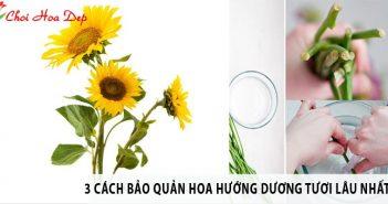 3 cách bảo quản hoa hướng dương tươi lâu nhất