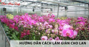 Hướng dẫn cách làm giàn, mái che và vị trí trồng lan