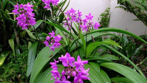 Hướng dẫn cách trồng 3 loại hoa phong lan phổ biến hiện nay