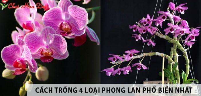 Hướng dẫn cách trồng 4 loại hoa phong lan phổ biến hiện nay