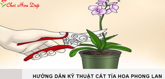 Hướng dẫn kỹ thuật cắt tỉa hoa phong lan