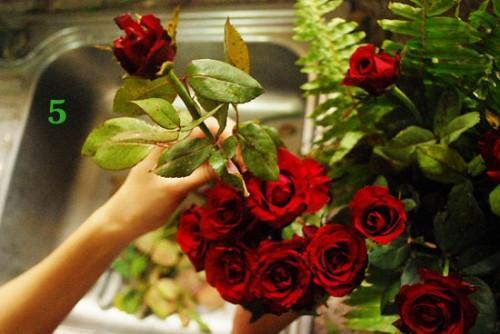 Cách cắm hoa hồng kết hợp lá dương xỉ đẹp hút hồn 4