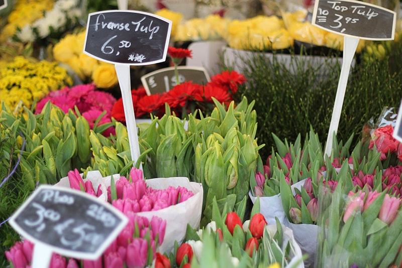 Hoa Tulip hiện nay là sản phẩm xuất khẩu chủ đạo của Hà Lan