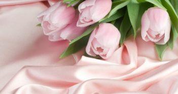 Nguồn gốc và ý nghĩa hoa Tulip - biểu tượng của Hà Lan