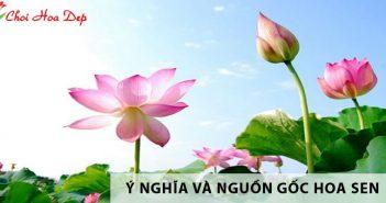 Nguồn gốc và ý nghĩa của hoa sen ít người biết