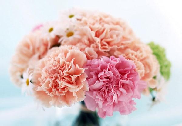 Hoa cẩm chướng được dùng nhiều trong các sự kiện