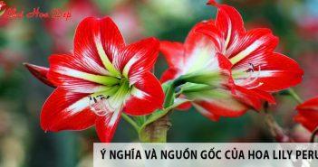 Ý nghĩa và nguồn gốc của hoa Lily Peru