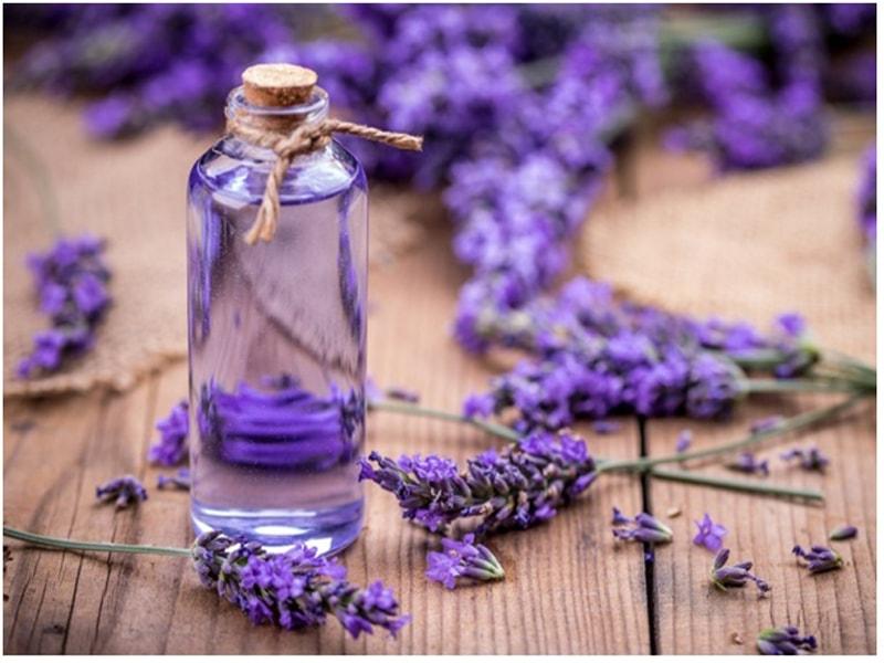 Hương hoa oải hương giúp trị mất ngủ cấp độ nhẹ