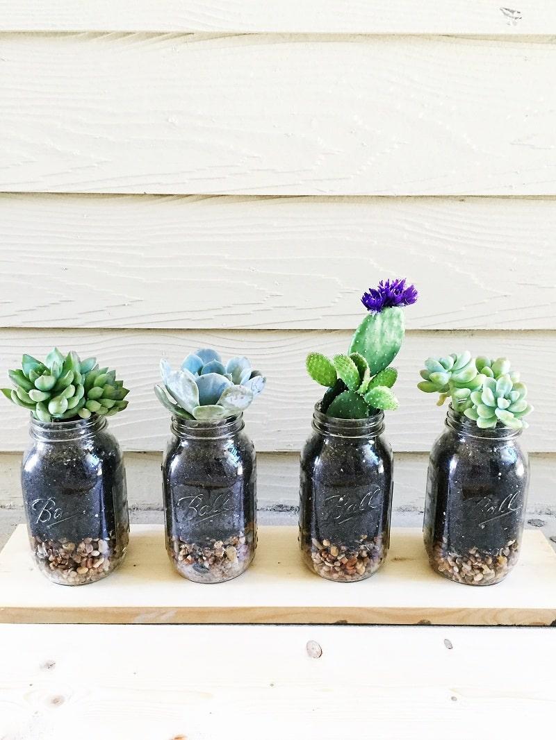 trồng hoa trong lọ thủy tinh