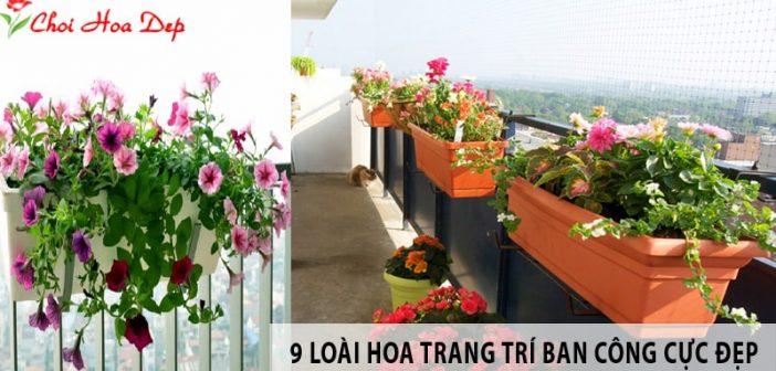 9 loài hoa trang trí ban công chung cư cực kỳ nổi bật