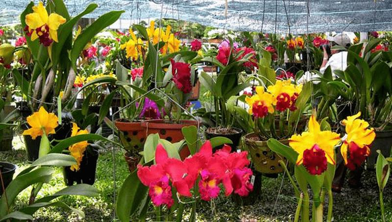 chăm sóc phong lan