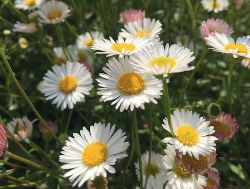 Giải đáp: Vì sao cây cối ra hoa vào mùa xuân?