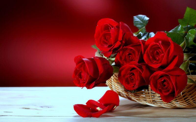 Chọn hoa hồng đỏ để tặng cô giáo