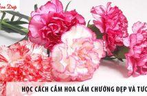 Học cách cắm hoa cẩm chướng đẹp và tươi lâu