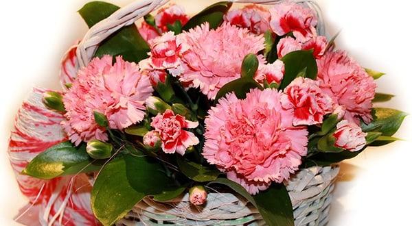 5 cách cắm hoa cẩm chướng đẹp và đơn giản