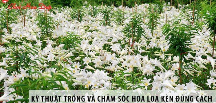 Kỹ thuật trồng và chăm sóc hoa loa kèn đúng cách