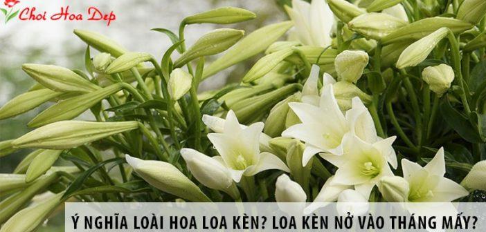 Ý nghĩa loài hoa loa kèn? Loa kèn thường nở vào tháng mấy?