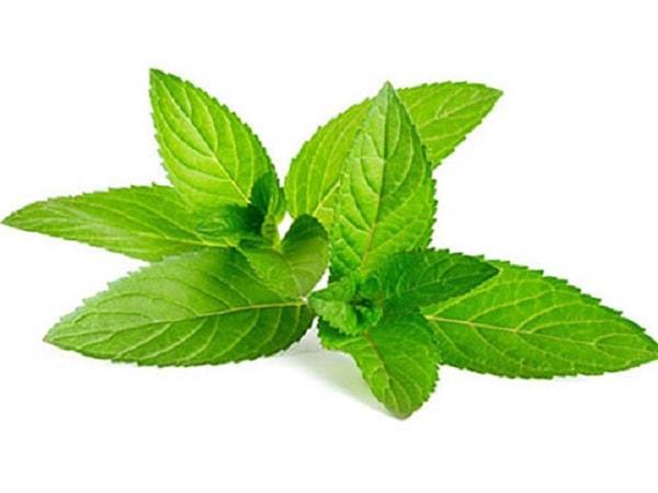 Mách bạn 10 loại cây cảnh có tác dụng chữa bệnh hiệu quả