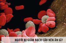 Bị giảm bạch cầu nên ăn gì để bổ sung bạch cầu trong máu?
