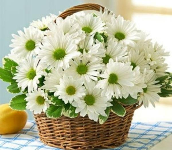 Gợi ý cách cắm hoa cúc