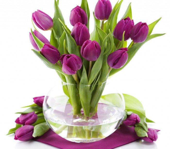 Tulip tượng trưng cho tình yêu đẹp
