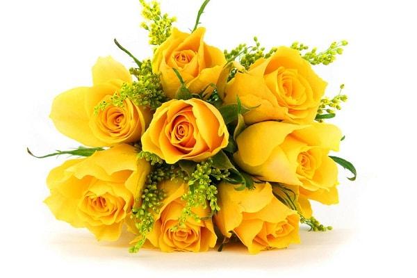 Hoa hồng vàng – biểu tượng của tình bạn vô tư, trong sáng