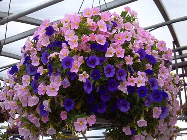 7 loại hoa dễ trồng, dễ chăm có thể trồng trong nhà