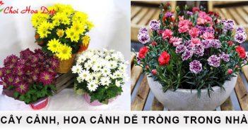 8 cây cảnh, hoa cảnh dễ trồng trong nhà 1