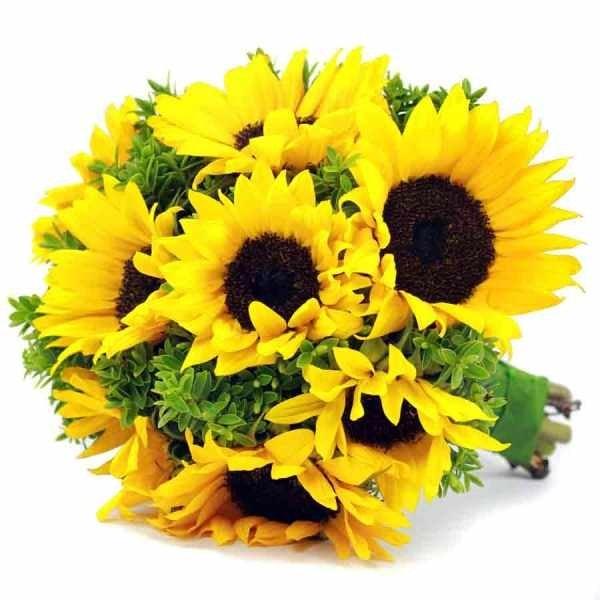 Hoa hướng dương luôn hướng về mặt trời như con hướng về mẹ