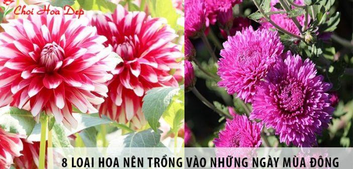 Top 8 loại hoa nên trồng vào những ngày mùa đông