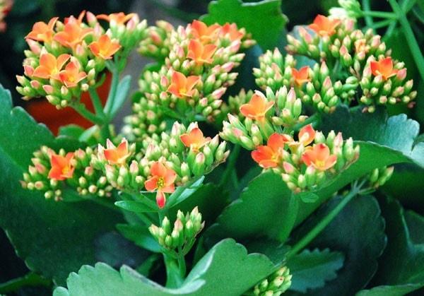 Hoa sống đời đẹp nhẹ nhàng, e ấp mang một sức sống tiềm tàng, mãnh liệt