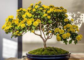10 loại hoa nên bày trong nhà dịp Tết Mậu Tuất 2018