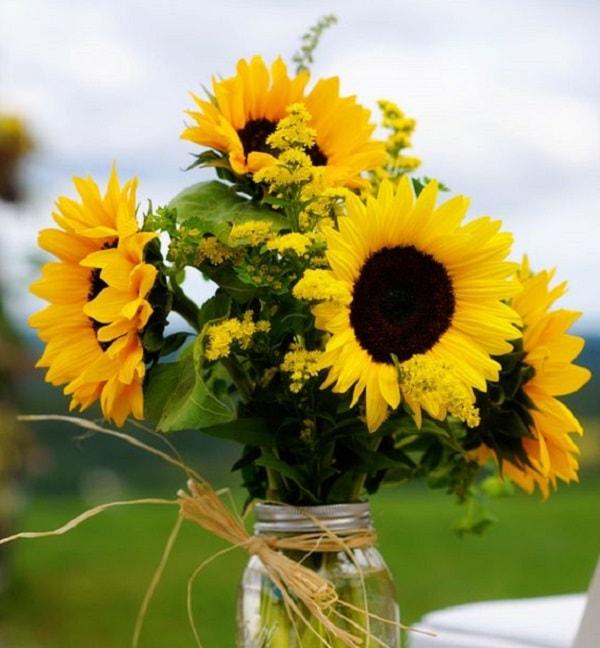 Hoa Hướng Dương biểu trưng cho một tình yêu chung thủy, hiếu nghĩa, quân trung