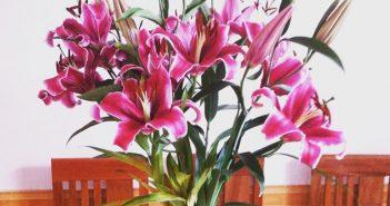 4 phương pháp lựa chọn, bày và giữ hoa ly tươi lâu dịp Tết
