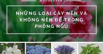 Những loại hoa, cây cảnh nên và không nên để trong phòng ngủ 1