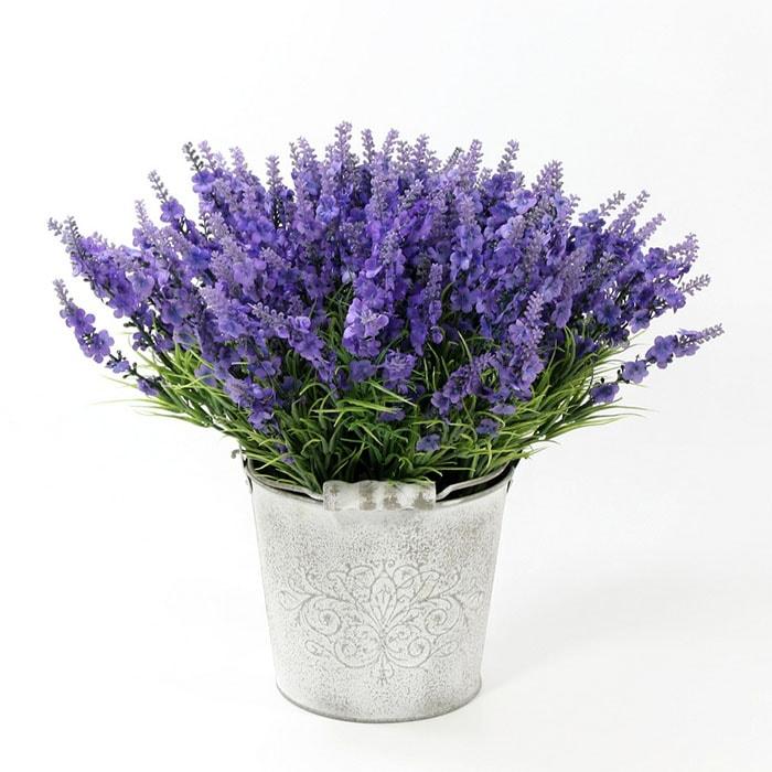 Hoa oải hương giúp không khí phòng ngủ trong lành hơn