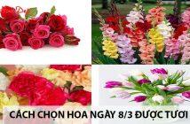 Cách chọn hoa ngày 8/3 được tươi lâu 1