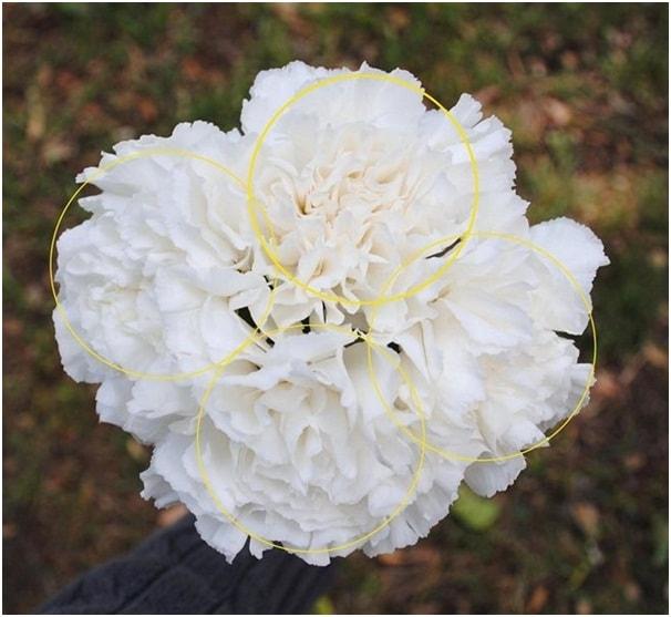 3 cách cắm hoa độc đáo và ý nghĩa ngày 20/10 tặng bạn gái 1