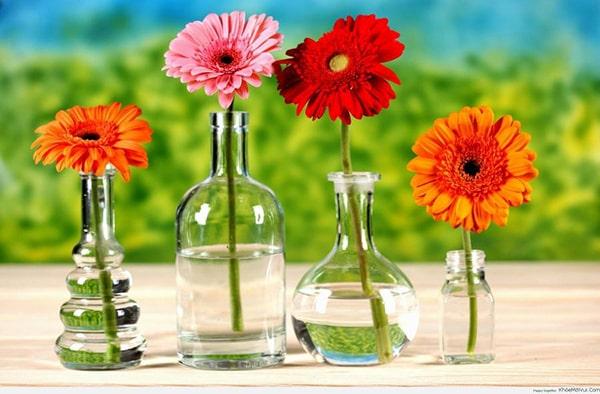 Cách cắm hoa 20/11 đẹp và ý nghĩa tặng thầy cô giáo 7
