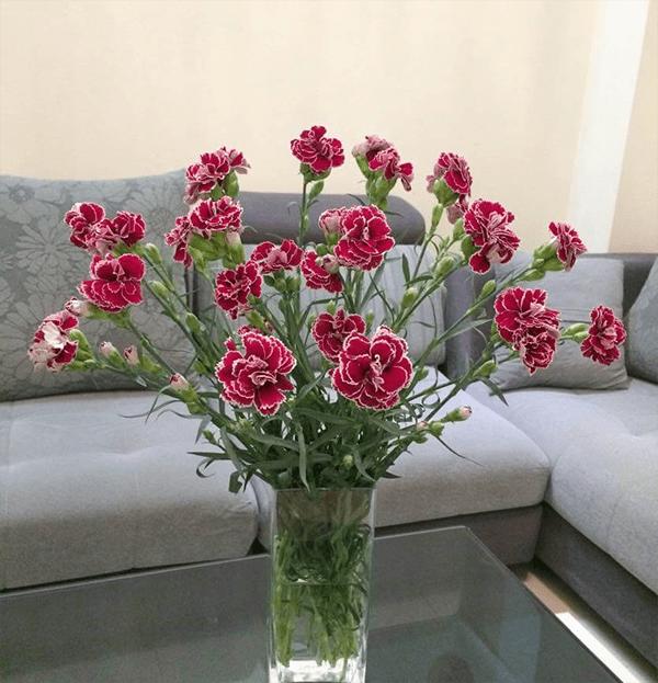 Bình hoa cẩm chướng hoàn thành