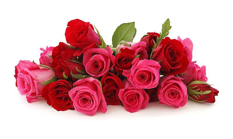 Cách chọn hoa hồng tươi lâu