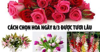 Cách chọn hoa ngày 8/3 được tươi lâu giúp các chàng ghi điểm