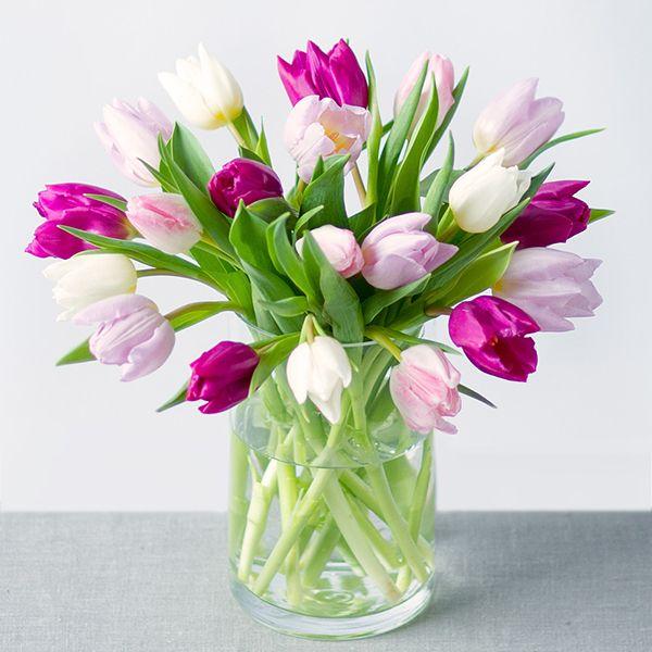 Cách chọn hoa Tulip tươi lâu