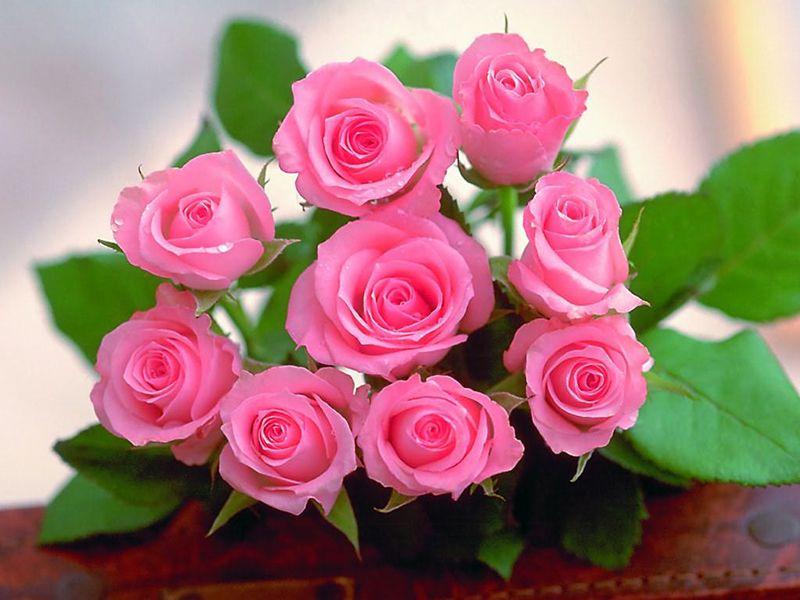 Hoa hồng phớt