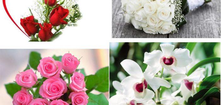 Ý nghĩa các loài hoa ngày 20/10 - ngày phụ nữ Việt Nam