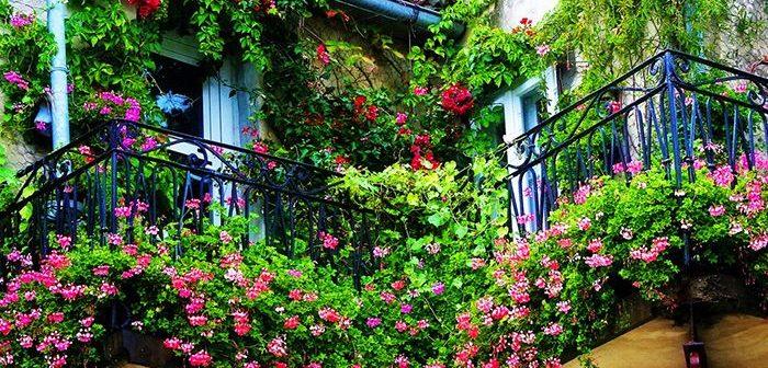 5 loại hoa trang trí ban công đẹp cho ngôi nhà của bạn
