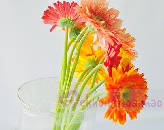 Cắt các bông hoa với chiều cao của bình