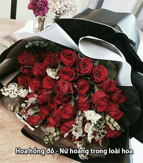 Hoa Hồng - Nữ Hoàng của loài hoa